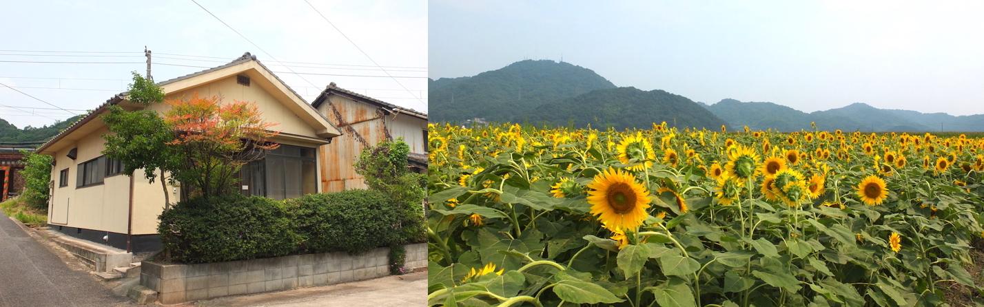 SIRUHAの工房と笠岡のひまわり畑